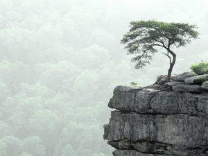 Tree on Mountain